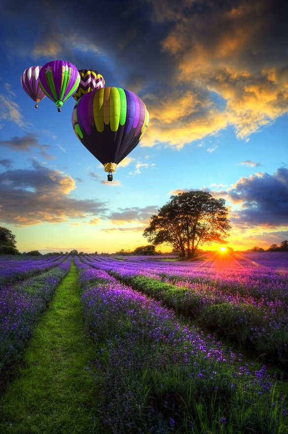 Balloon-ride-over-lavender-fields