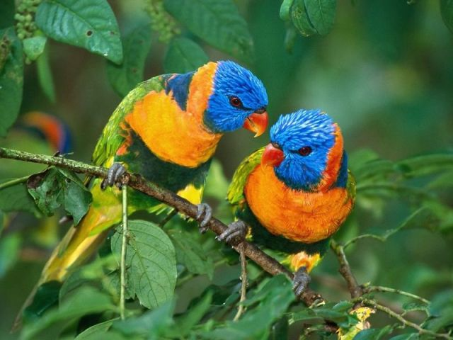 colorful-tropical-wallpapers-hd-beautiful-tropical-colorful-birds-in-tree-picture-animal-pictures-beautiful