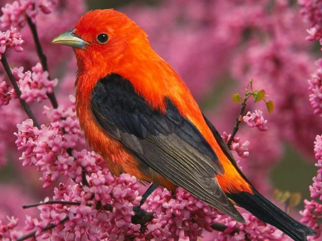 Colourful-Tropical-Bird-bright-colors-17474497-1024-768