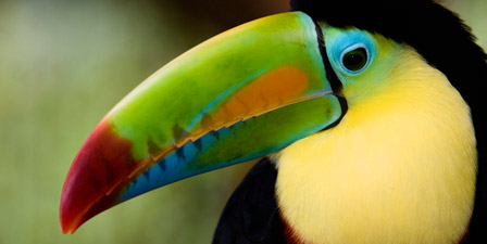 tropical-birds-4687