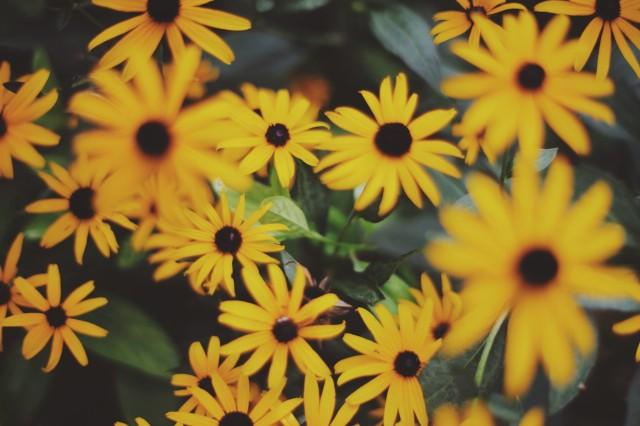 Wild-Flowers-e1375418720698