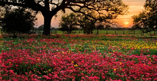 Wildflower blooms in South Texas.