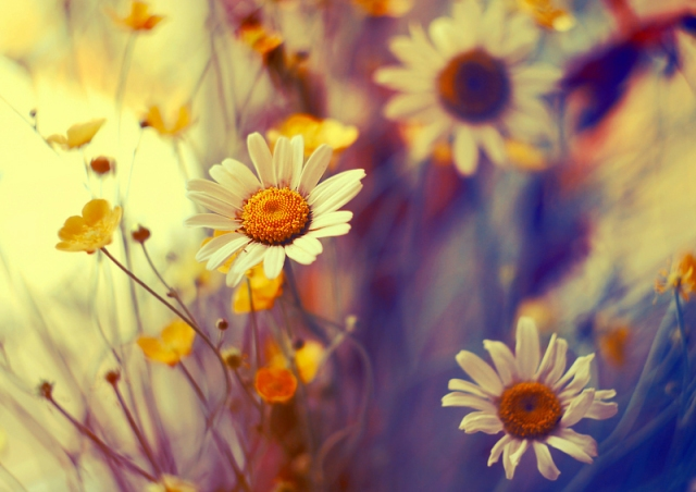 wildflowers_by_kokoszkaa-d514wsj