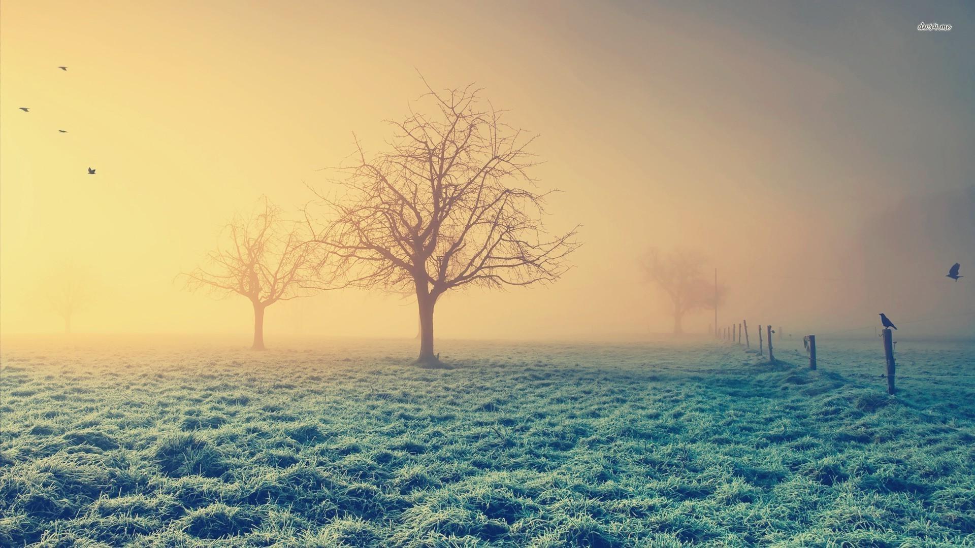 frosty morning wallpaper - photo #5