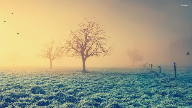 12475-frosty-morning-1920x1080-nature-wallpaper