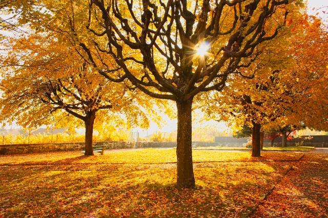 autumn-trees-sunny-day-ewa-ciebie