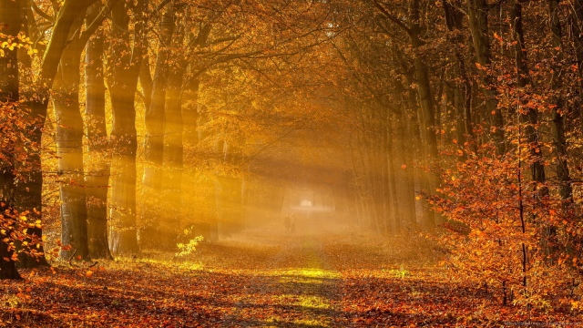fall-backgrounds-9