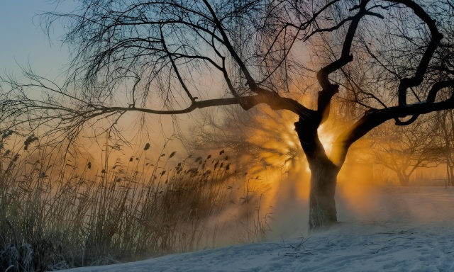 frosty_morning_sunshine_snow_rays_tree_hd-wallpaper-963334