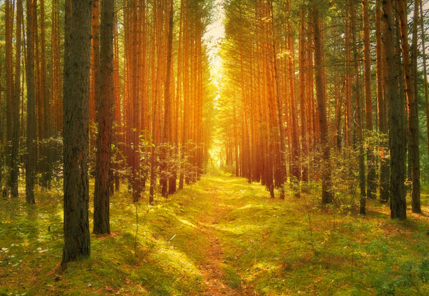path-in-the-woods-13615460746I3