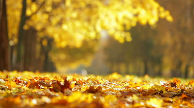 stock-footage-autumn-city-park-on-a-sunny-day