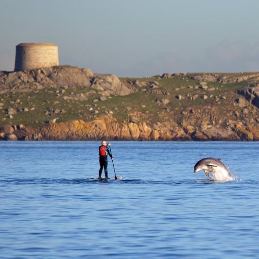 Dolphin_at_Dalkey_Island